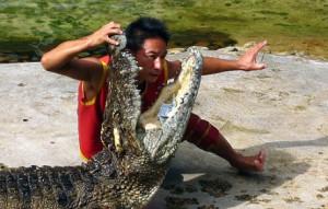 krokodil-show
